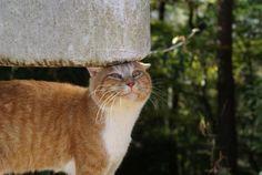 今日の猫ちゃん(やあ!ご機嫌かい?)の画像 | いつもの猫通り