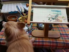 Cross stitching... no problem. Nana has room for me. Says zek