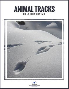 Be a Detective - Animal Tracks : Student - Printables - Northwoods Press Animal Tracks, Canadian History, Biomes, Critical Thinking, Geography, Detective, Homeschool, Printables, Student