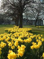Harrogate Stray - what a great space for outdoor fitness training