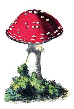 fairy red and white mushrooms | Vintage Graphic - Cute Red and White Mushroom - The Graphics Fairy