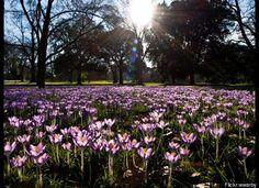 Kew Royal Botanical Gardens, England