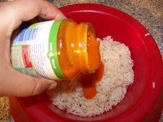 Leichte Kost für Hunde bei Magen Darm
