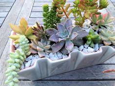 Succulent Arrangements: My Latest Attempt at Gardening | Mint ...