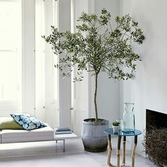 Indoor tree ♥