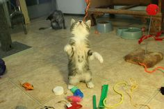 なんでみんなに笑われるんだろう??奇跡の模様が入った猫の写真10選