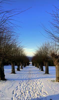 Winter Avenue by Kari  Meijers on 500px