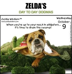 Zelda's Day-To-Day Dogmas