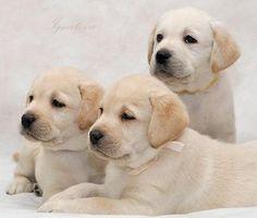 Buy puppies from responsible breeders
