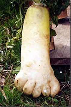 ... about Oddities on Pinterest | Vegetables, Weird and Baby carrots