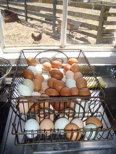 Yenni Ranch Eggs