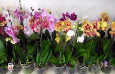 Flowers, Plant, Royal Icing Flowers, Flower, Florals, Floral, Blossoms
