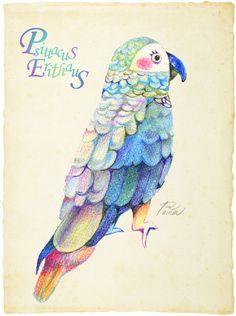 ヨウム[色鉛筆/絵/イラスト/鳥] の画像|イラストレーターさとうれいな