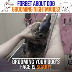 dog grooming shop Forget About Grooming Nightmares Grooming Yorkies, Schnauzer Grooming, Dog Grooming Tools, Dog Grooming Styles, Dog Grooming Shop, Dog Grooming Salons, Poodle Grooming, Dog Grooming Business, Pet Shop
