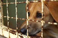 Furti di cani : un caso a Genova per ottenere l'affitto non pagato