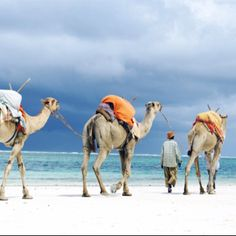 Camels in Mombasa, Kenya. (The heat and humidity here is incredible). But as exotic as it gets! Btw I was in those camels;)