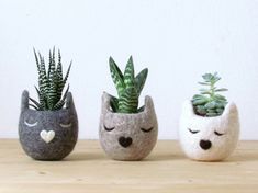 pflanzenkübel schlafende katzen grau beige weiß