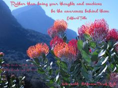 Rather than being your thoughts and emotions be the awareness behind them. ~ Eckhart Tolle -   Cushion  Kirstenbosch Botanical Garden CapeTown South Africa