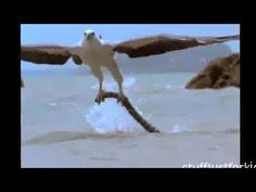 Animals Attack Big Birds Attack ~ Best Funny Animals -  #bird #animals #bird_watchers_daily #animal #birdwatching #pets #nature_seekers #birdlovers Dog Training – The Perfect Pooch System!  Click HERE! After a killer whale killed a SeaWorld trainer during a live broadcast, a look back at other recent incidents involving animals look... - #Birds