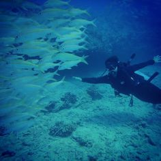 #scuba #diving #Waikiki #Hawaii http://ift.tt/1BXBYcU @hawaiiscubadiving