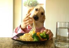 Natural Dog Food - Animals And Photos Calcium Rich Foods, Golden Retriever Mix, Natural Dog Food, Can Dogs Eat, Dry Dog Food, Dog Eating, Safe Food, Dog Food Recipes, Animales