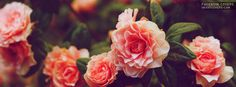 Upload this Carnation Facebook Covers for your Facebook profile!