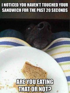 funny pictures of dogs- This even looks like Tiki!