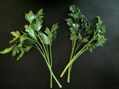 Get to Know a Better Flat-Leaf Parsley: Titan Parsley
