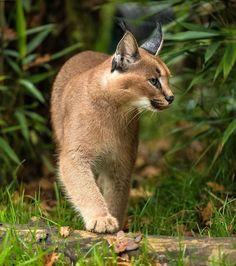 A beleza da vida selvagem