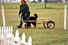 Carting with your Berners