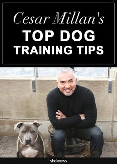 When the Dog Whisperer himself offers advice on how to train your pet, you'd best be listening