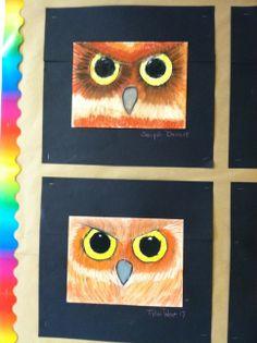 Owls 5th