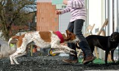 Verteidigung im Notfall: Wenn der eigene Hund angegriffen wird | Hundewissen | Planet Hund