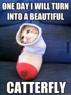 Funny pet memes, cute animal memes, cute animal pictures, funny pictures, a Funny Animal Jokes, Funny Cat Memes, Cute Funny Animals, Cute Baby Animals, Funny Cute, Cute Cats, Funniest Memes, Funniest Animals, Cat Fun