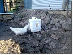 great idea on for free duck poop waterer