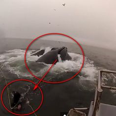 Огромно морско чудовище поглъща водолаз! (ВИДЕО)