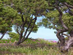 Travelogue Sardinia: I colori di Stintino in primavera
