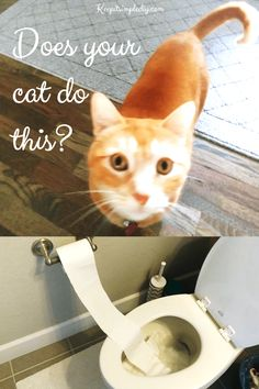 Does Your Cat put the Toilet Paper in the Toilet? - Keep it Simple, DIY