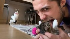 Cat Attack - Cat Reaction Compilation - YouTube Funny Animal Videos, Funny Animals, Cute Animals, Mini Lop Bunnies, Anime Websites, Cat Attack, Fantasy Art Men, Cute Stories, Try Not To Laugh