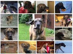 Koirani on terveydenhoitoalan ammattilainen ja hymy - kuka maksaa palkan? Animals, Animales, Animaux, Animal, Animais