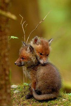 "lovejolynnblr: "" taramysweetlove: "" wildlife-beauty-scoubidou-ouah: ""coffeenuts """
