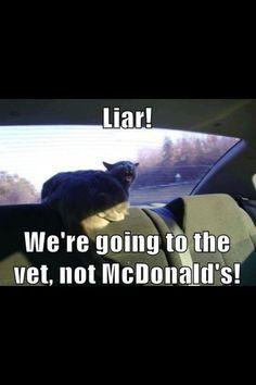 Haha funny cat meme: