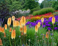 Take a look at the beautiful RHS Garden Harlow Carr in Harrogate, North Yorkshire where you can enjoy a fabulous family day out. Free to RHS Members. Garden Center, Plants, Plant Combinations, Outdoor Garden, Dream Garden, Garden Borders, Border Plants, Perennials, Tall Plants