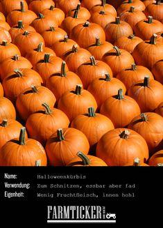 Das Bild, das man im Kopf hat, wenn man an Kürbis denkt. Er ist zwar essbar, schmeckt aber nicht besonders gut. Aus ihm werden zu Halloween die Kürbislaternen hergestellt.  Weitere Infos zu allen möglichen Kürbissorten findest du im Link! Fruit Picture, Harvest, Pumpkin, Vegetables, Pictures, Link, Vegetable Medley, Vitamins And Minerals, Carving Pumpkins