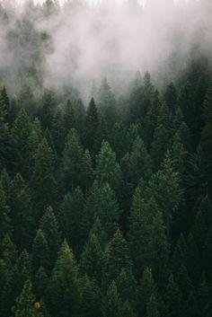 October Snow (by danotis) - trees / landscape / pacific northwest / mist