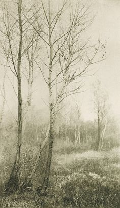 Black and white vintage landscape photography November 1894