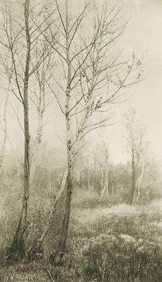 > November 1894