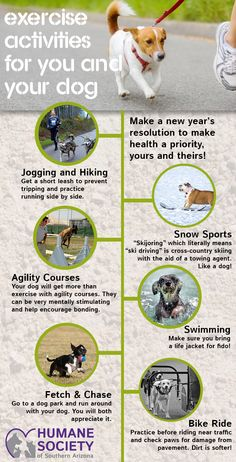You are your dogs only health advocate! Promise to care for their health needs as well as your own in 2016. Get out and exercise today!