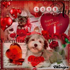 Happy Valentines Day Wishes, Happy Valentine Day Quotes, Valentines Day Gifts For Him, Valentine's Day Quotes, Grim Reaper Art, Valentine Picture, Tumblr Image, Saint Valentine, Pictures Images