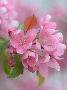 Good Morning Beautiful Flowers, Beautiful Rose Flowers, Unusual Flowers, Happy Flowers, Flowers Nature, Amazing Flowers, Pretty Flowers, Pink Flowers, Flower Background Wallpaper